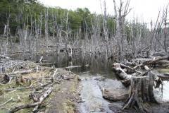 04 Tierra del Fuego 14.11.2007 21-47-20