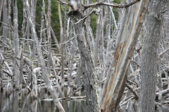 04 Tierra del Fuego 14.11.2007 21-48-54