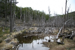 04 Tierra del Fuego 14.11.2007 21-57-51