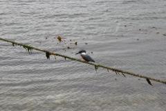 05 Estancia Harbeton 15.11.2007 20-13-48